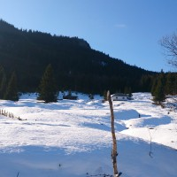 Colibita Sub-Deal iarna